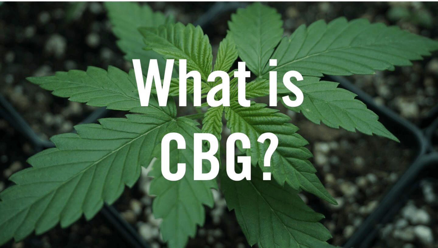 CBG or Cannabigerol is a promising cannabinoid compound found in Cannabis Sativa